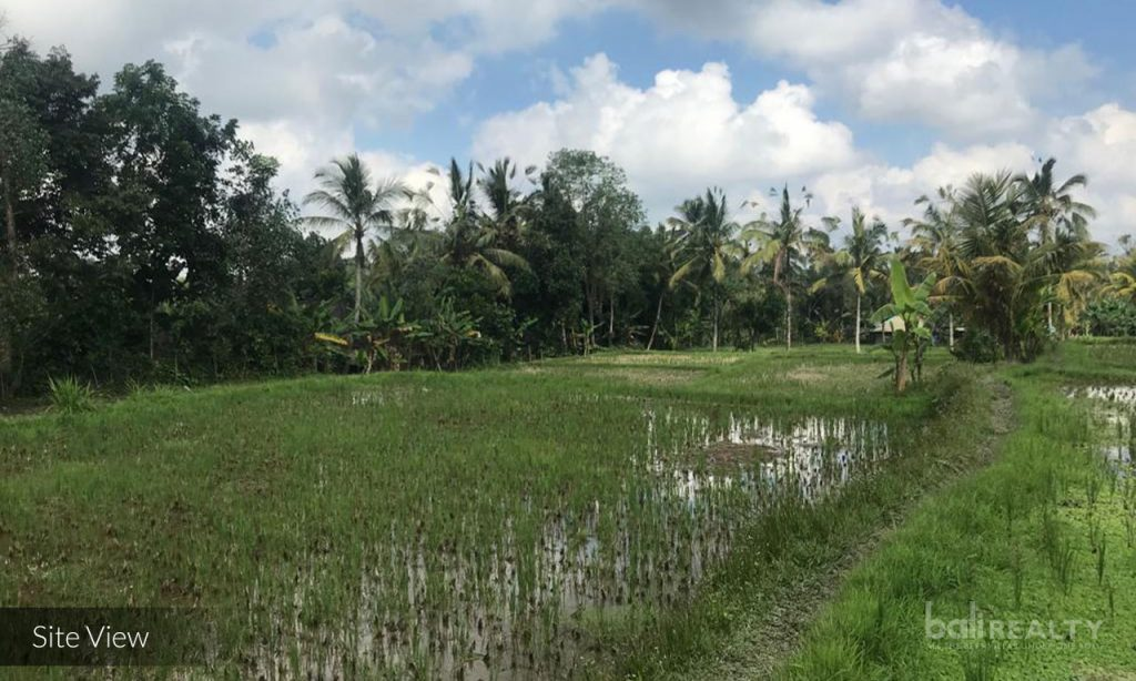 freehold ubud land for sale